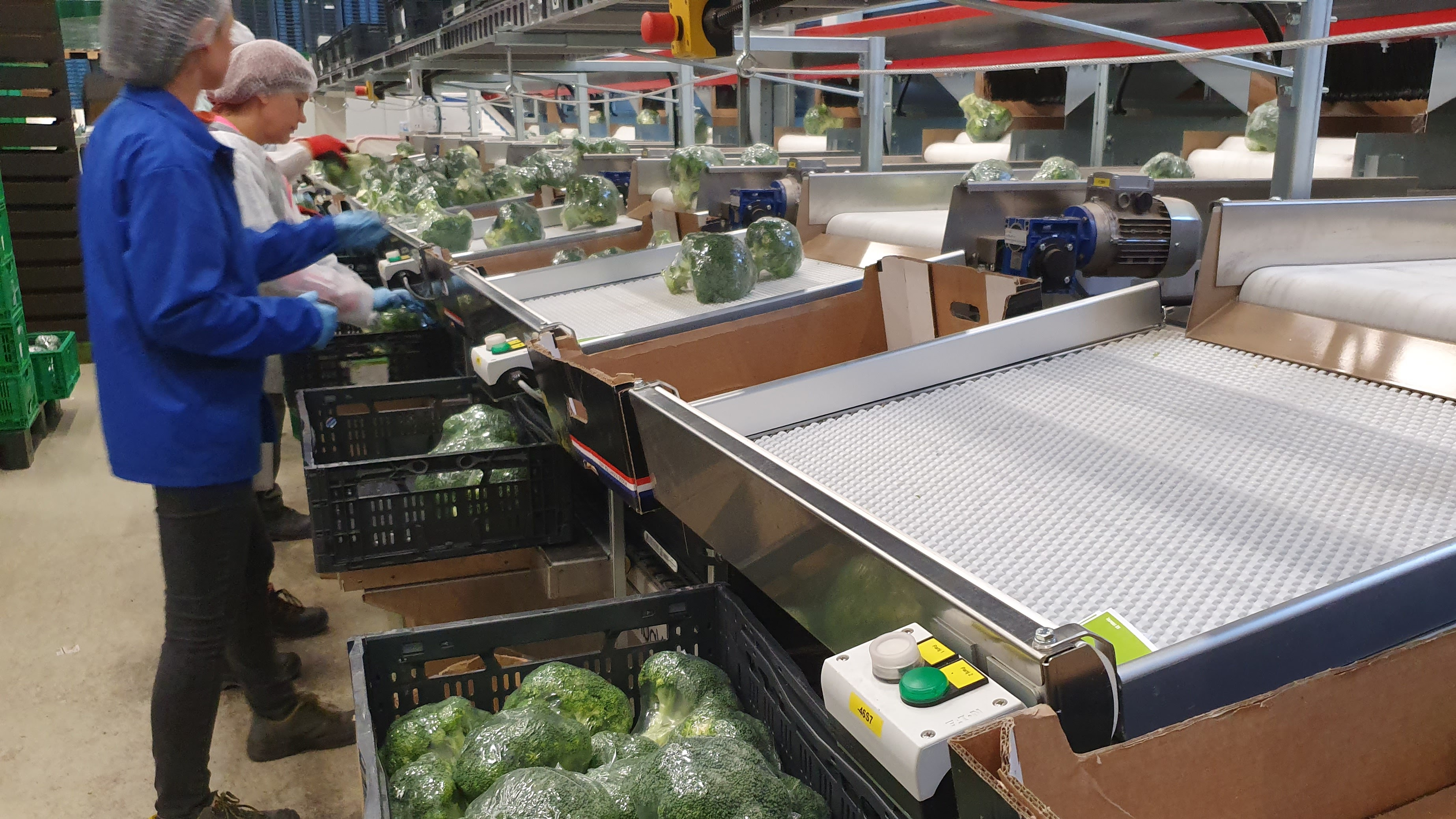Broccoli verkoop op maat bij The Greenery